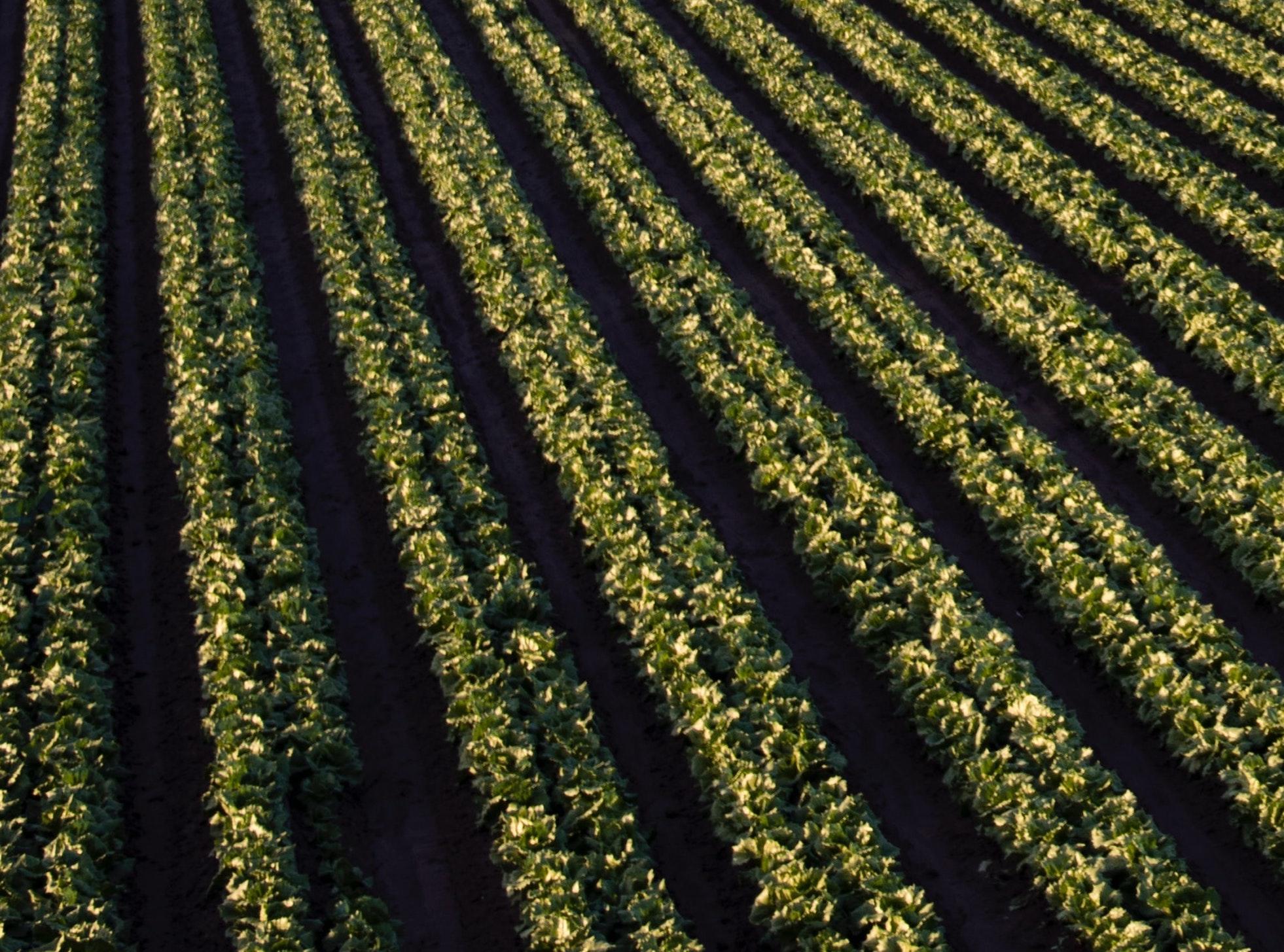 Agrilogistics In India