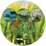 Bioinsecticides Market Outlook