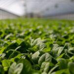Plant Activators Market Research